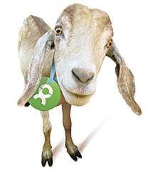 Oxfam America Unwrapped - Goat