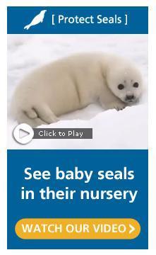 Humane Society Seals
