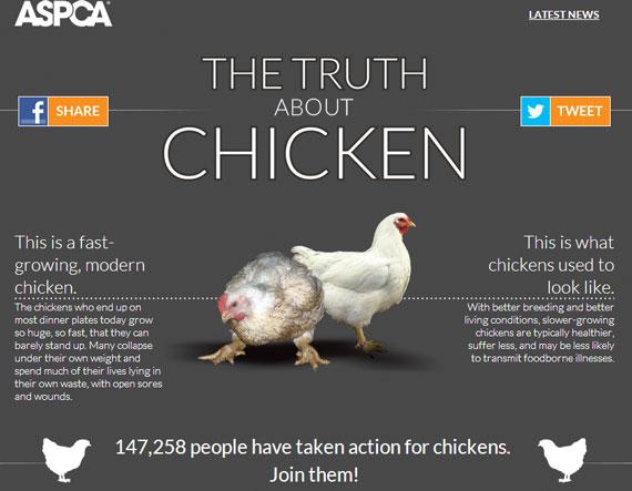 ASPCA-Truth-About-Chicken
